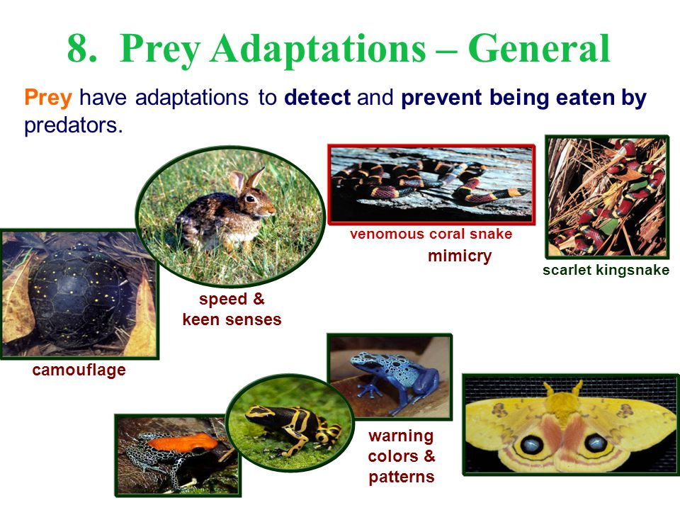 8. Prey Adaptations – General