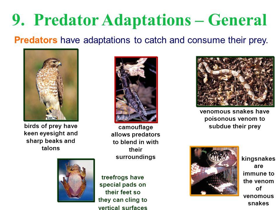 9. Predator Adaptations – General