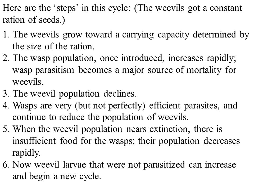 Here are the 'steps' in this cycle: (The weevils got a constant ration of seeds.)