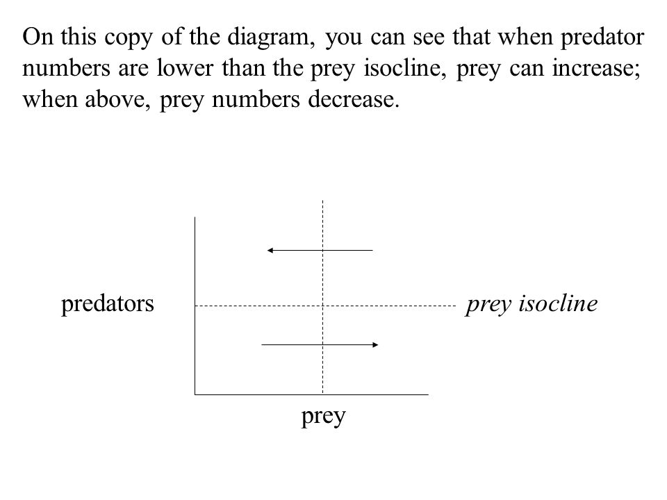 On this copy of the diagram, you can see that when predator numbers are lower than the prey isocline, prey can increase; when above, prey numbers decrease.