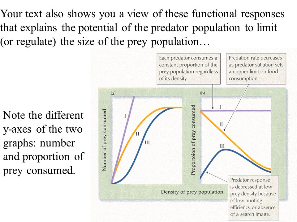 Your text also shows you a view of these functional responses that explains the potential of the predator population to limit (or regulate) the size of the prey population…