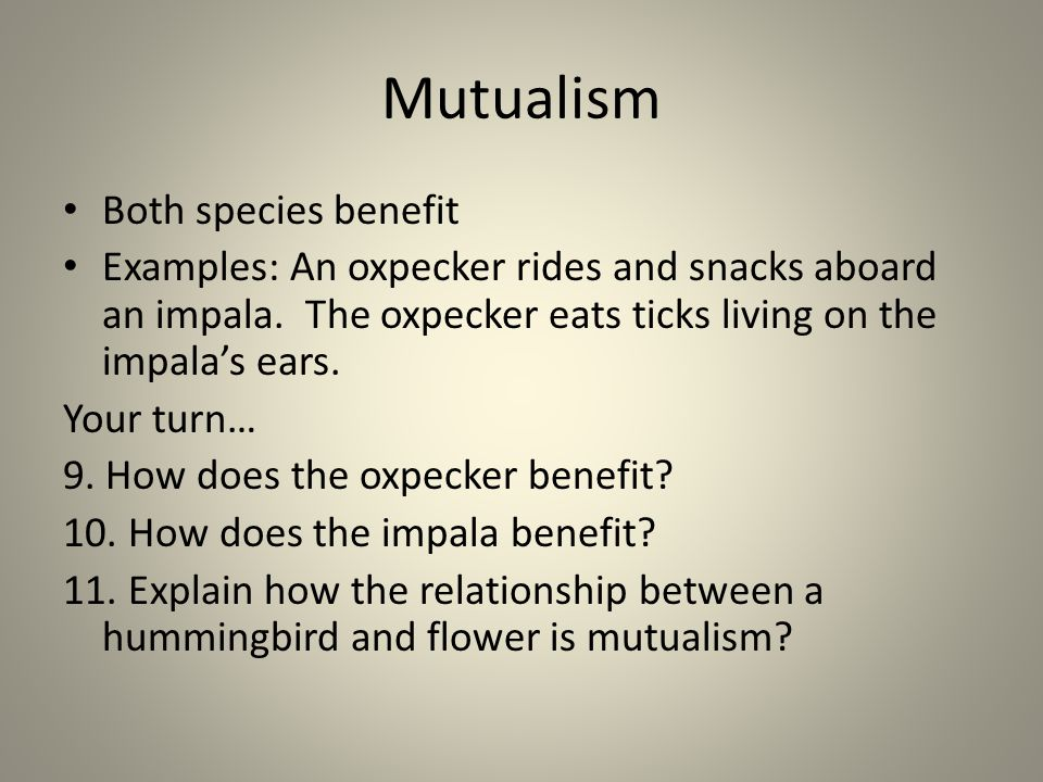 Mutualism Both species benefit