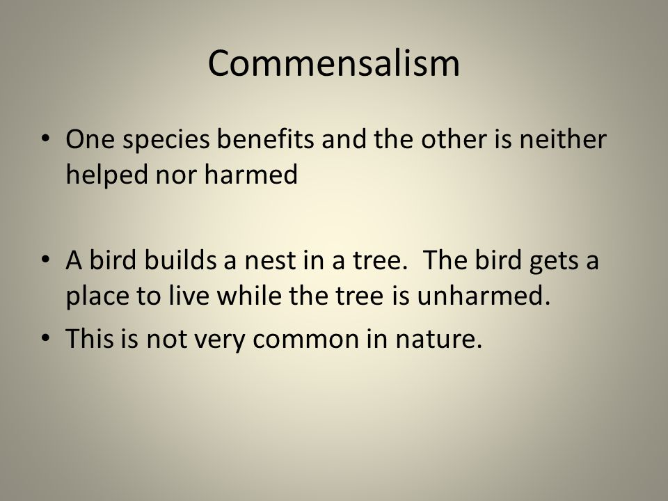 Commensalism One species benefits and the other is neither helped nor harmed.