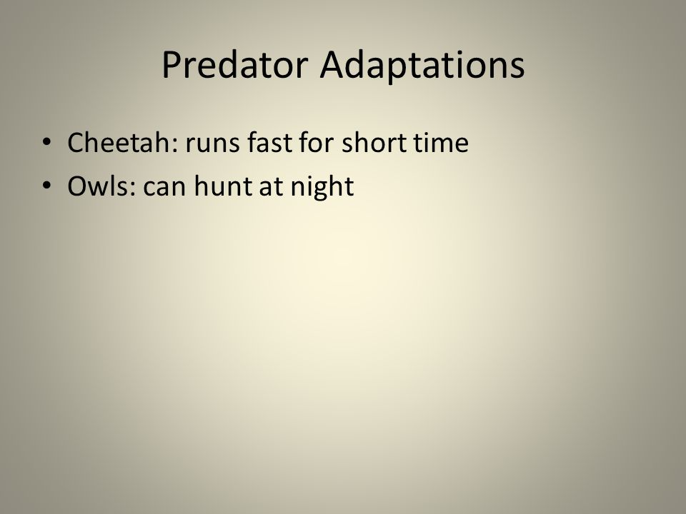 Predator Adaptations Cheetah: runs fast for short time