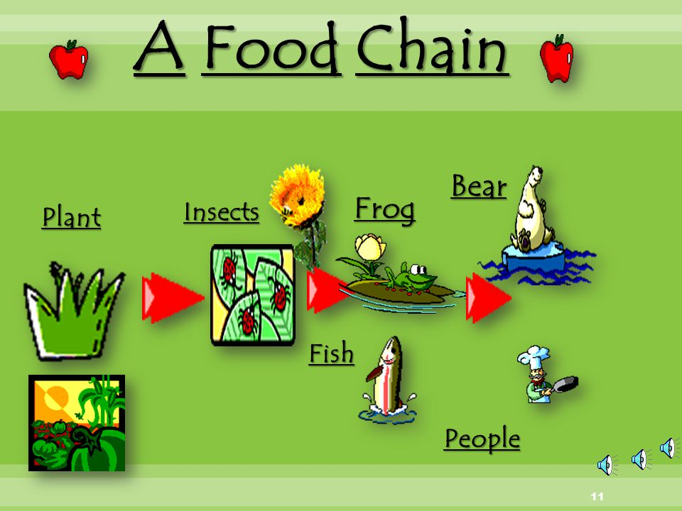 A Food Chain Bear Frog Insects Plant Fish People