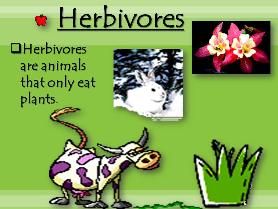Herbivores Herbivores are animals that only eat plants.