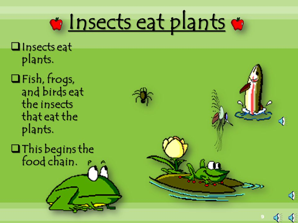 Insects eat plants Insects eat plants.