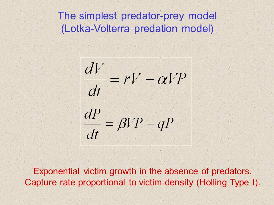 The simplest predator-prey model (Lotka-Volterra predation model)