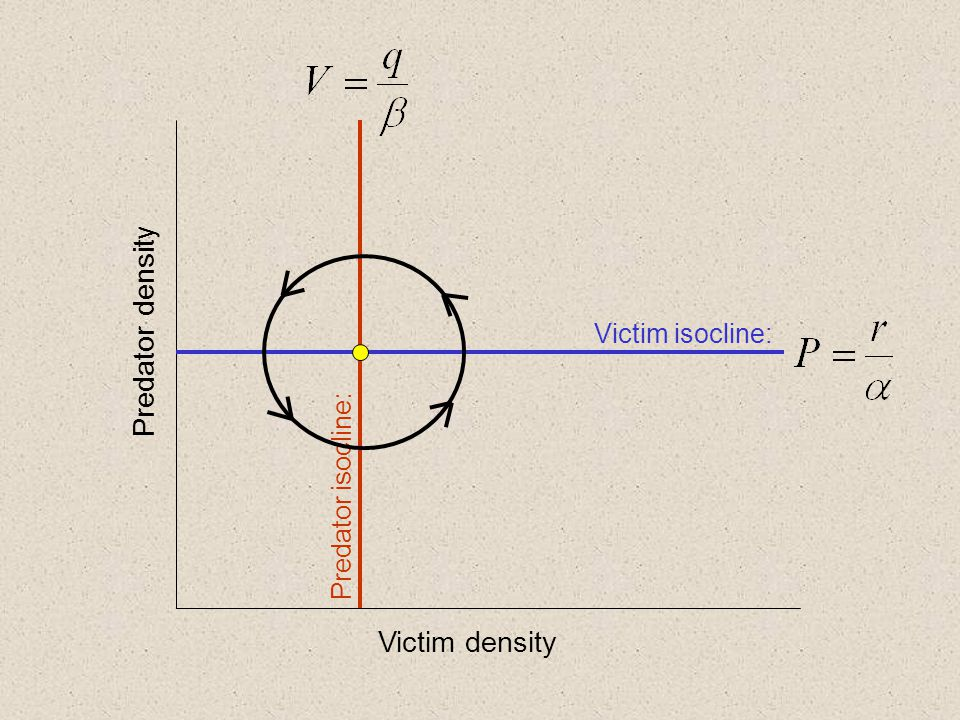 Predator density Victim density Victim isocline: Predator isocline:
