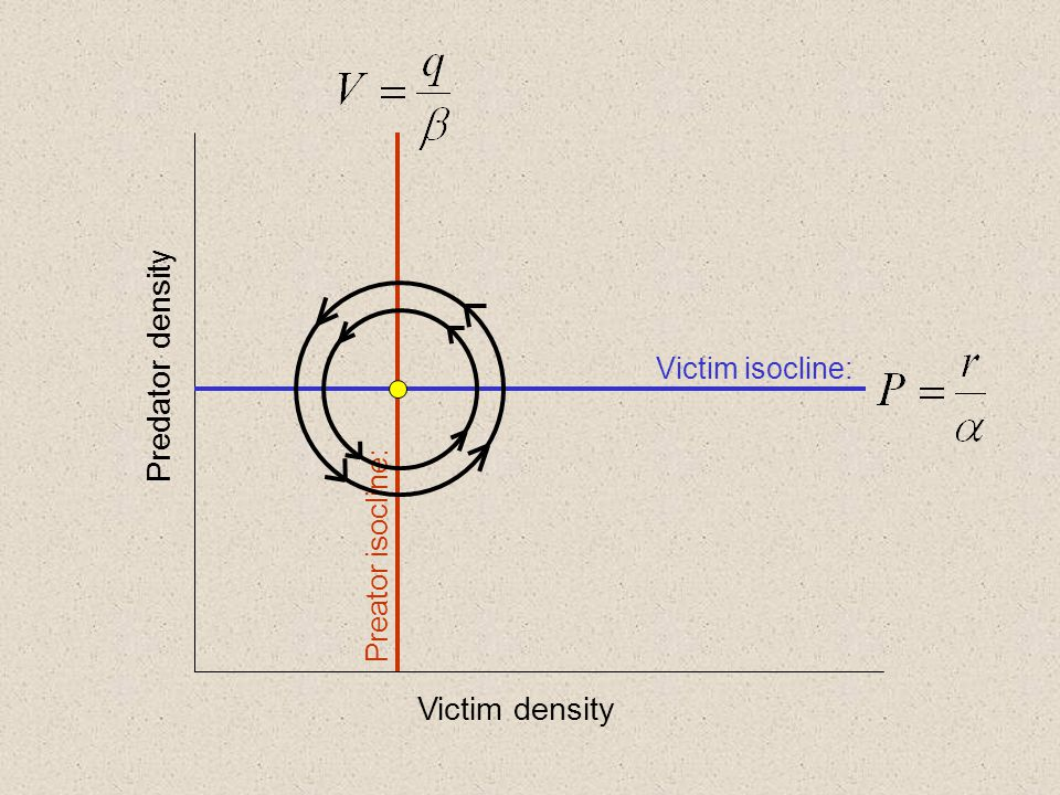 Victim density Predator density Victim isocline: Preator isocline: