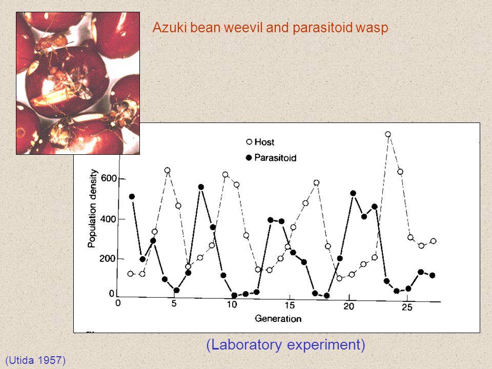 (Laboratory experiment)