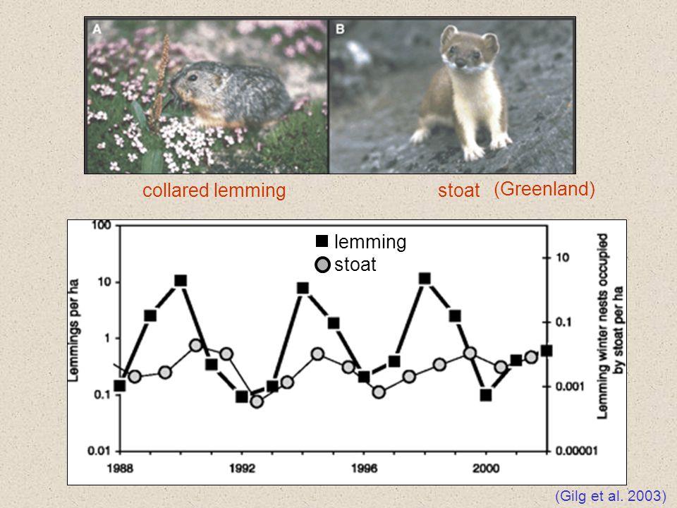 collared lemming stoat (Greenland) lemming stoat (Gilg et al. 2003)