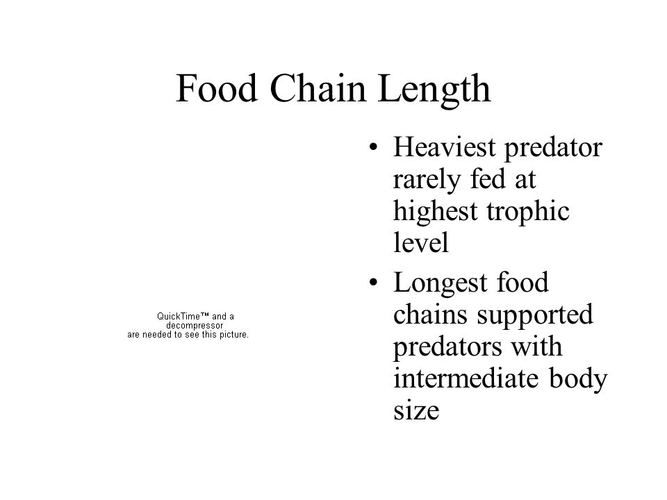 Food Chain Length Heaviest predator rarely fed at highest trophic level. Longest food chains supported predators with intermediate body size.