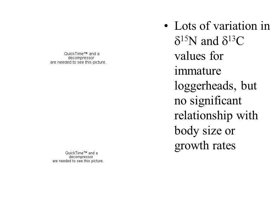 Lots of variation in 15N and 13C values for immature loggerheads, but no significant relationship with body size or growth rates