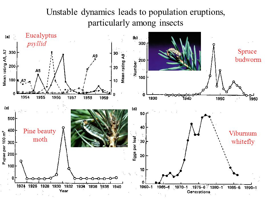 Unstable dynamics leads to population eruptions,
