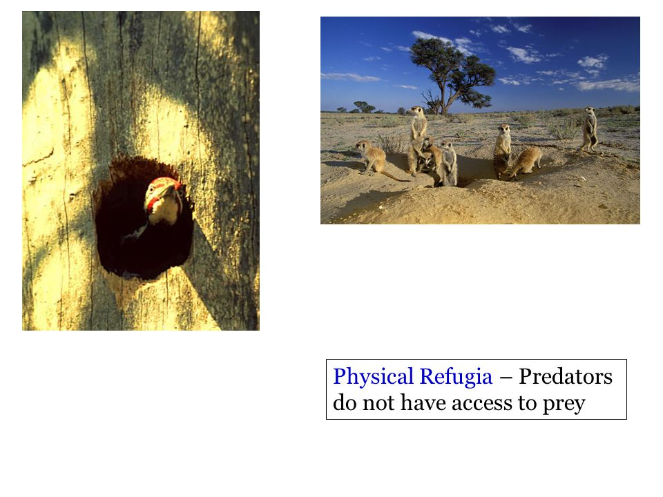 Physical Refugia – Predators