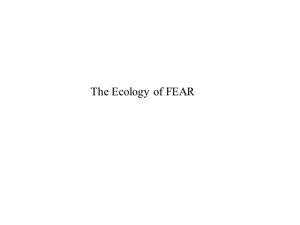 The Ecology of FEAR