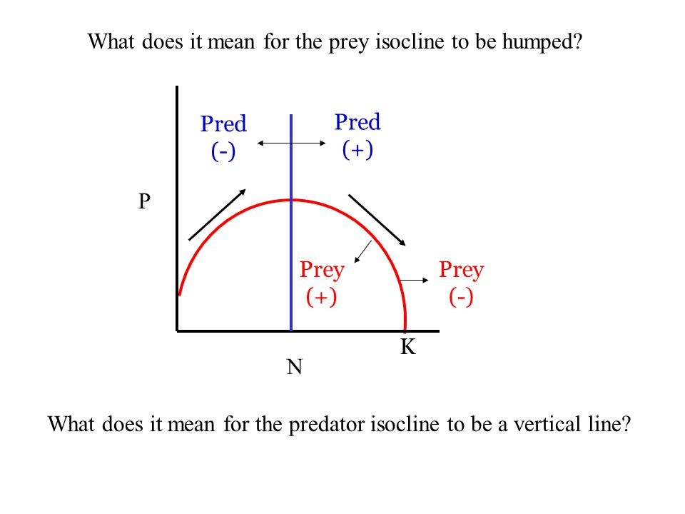 What does it mean for the prey isocline to be humped