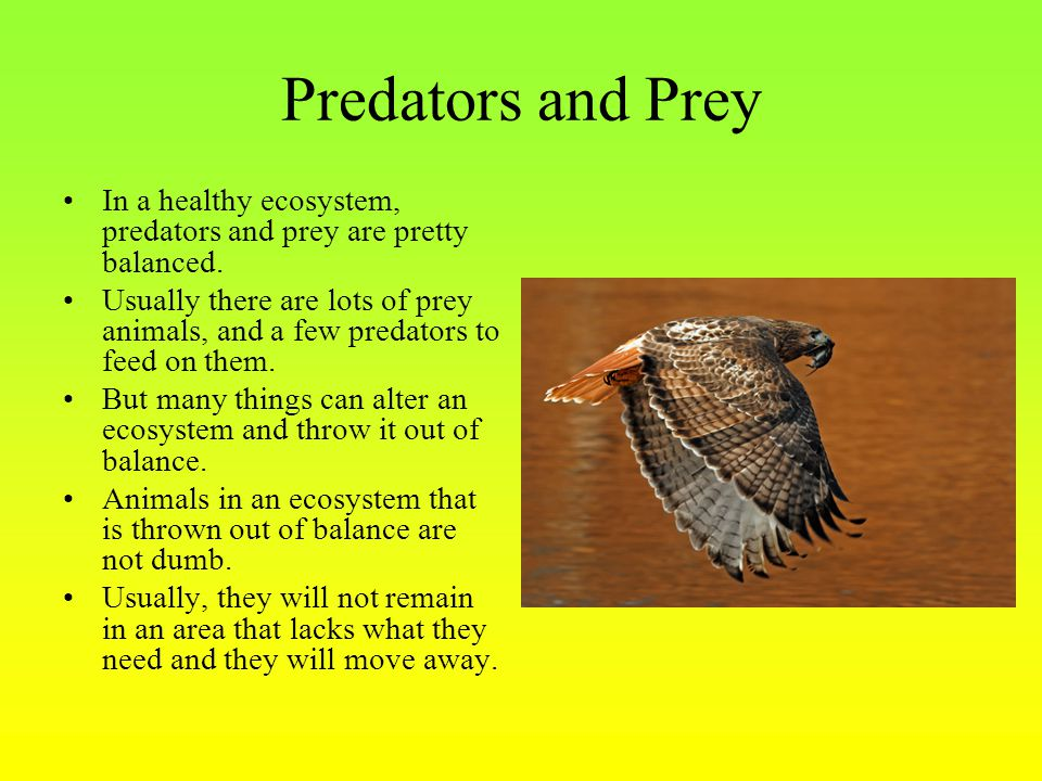 Predators and Prey In a healthy ecosystem, predators and prey are pretty balanced.