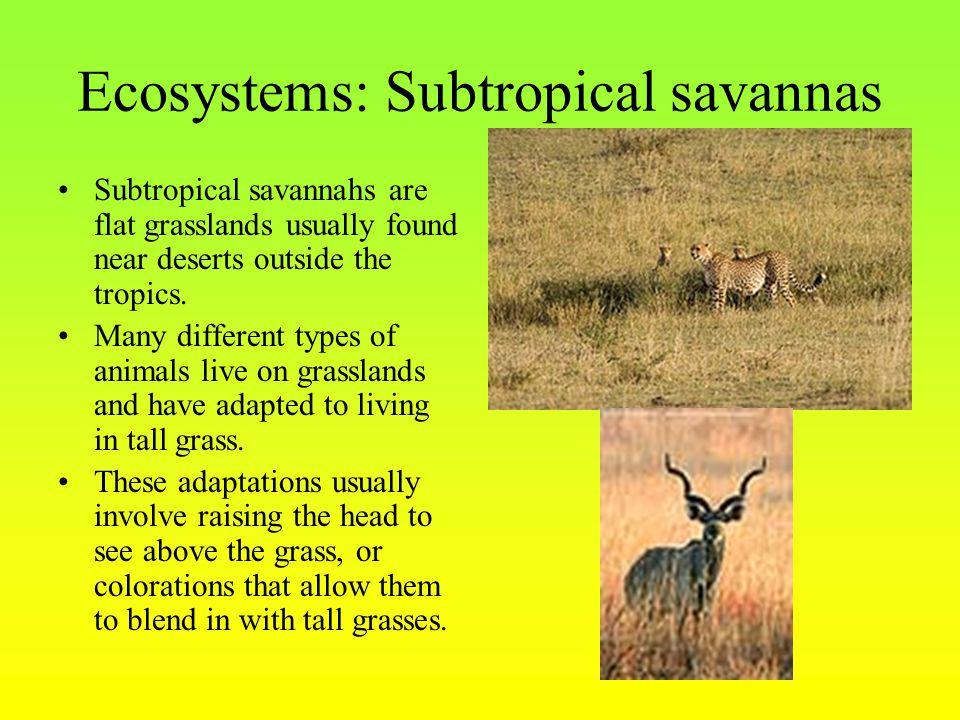 Ecosystems: Subtropical savannas