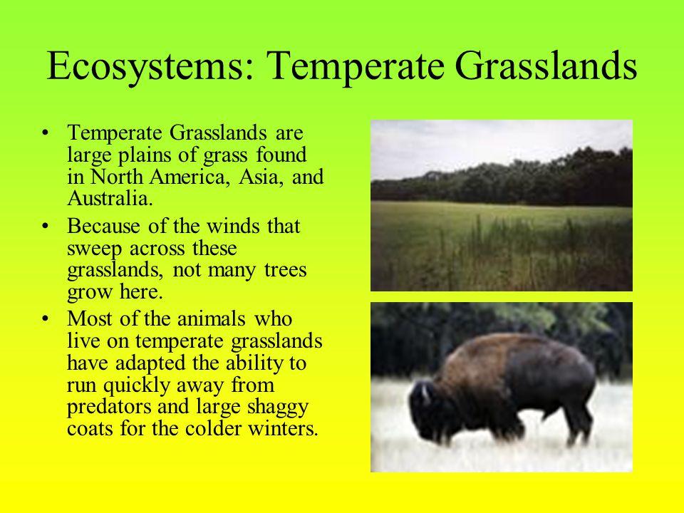 Ecosystems: Temperate Grasslands