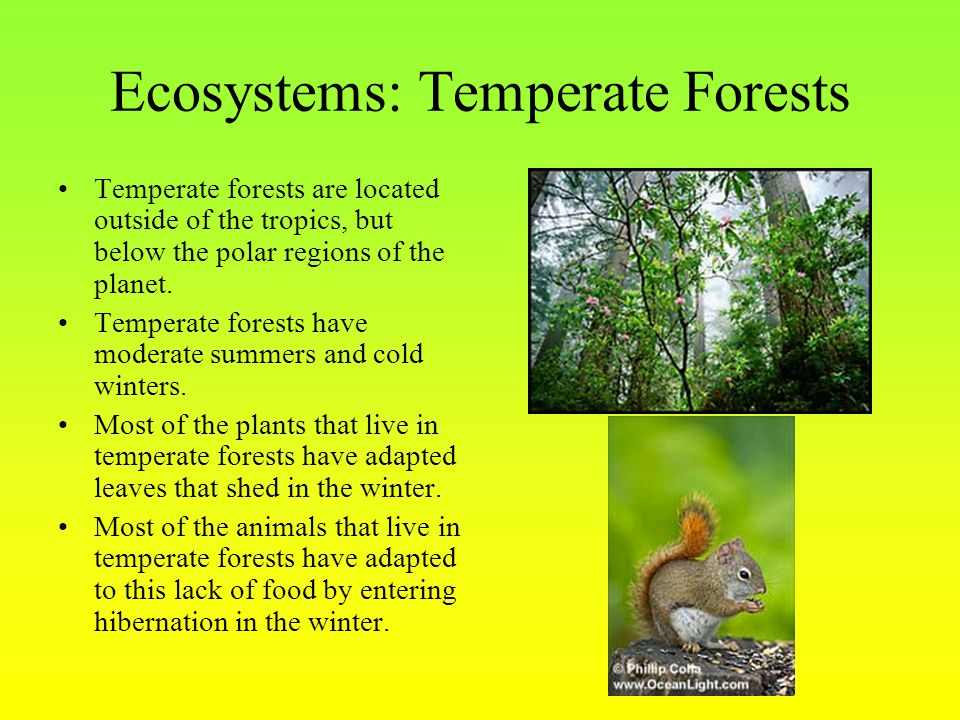 Ecosystems: Temperate Forests