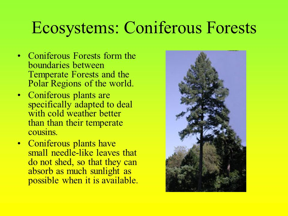 Ecosystems: Coniferous Forests