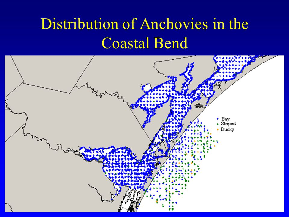 Distribution of Anchovies in the Coastal Bend