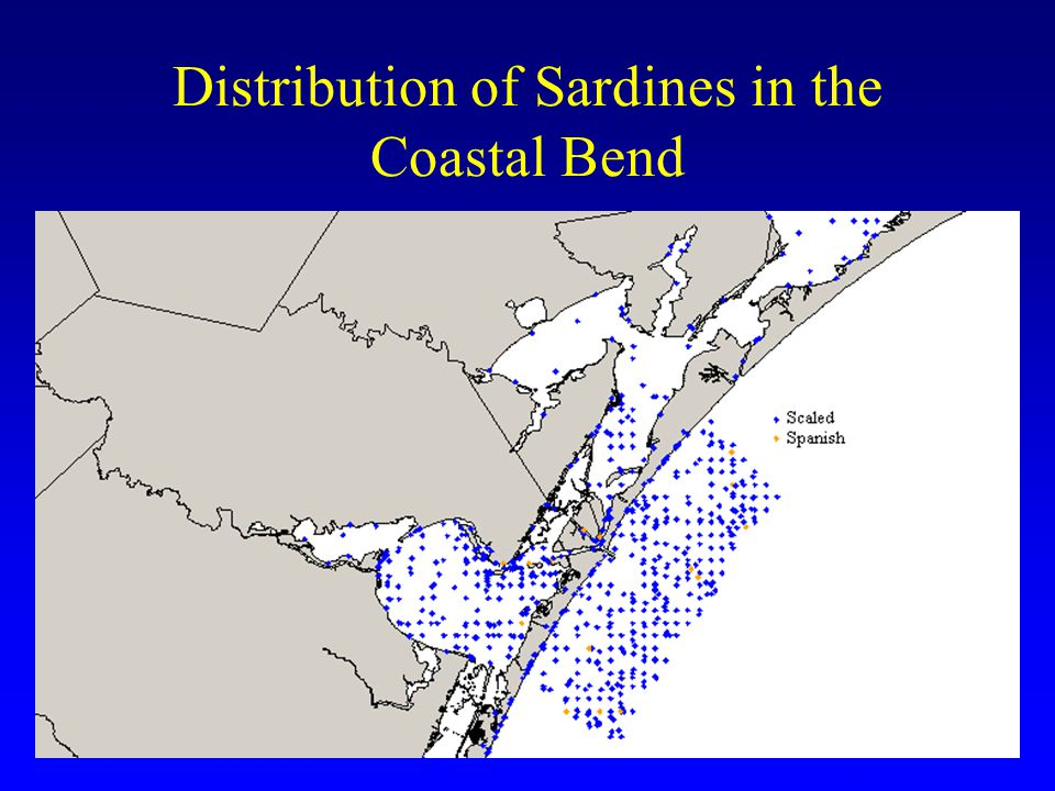 Distribution of Sardines in the Coastal Bend