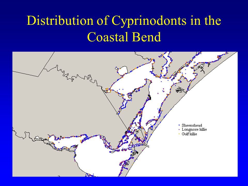 Distribution of Cyprinodonts in the Coastal Bend