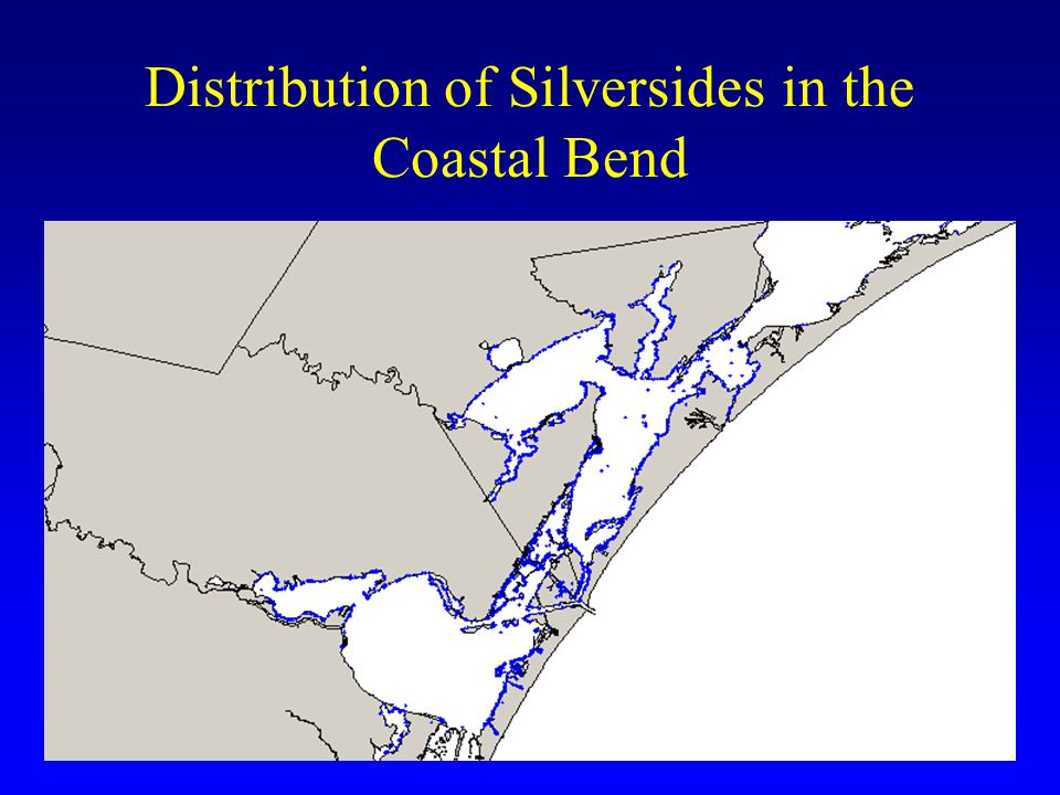 Distribution of Silversides in the Coastal Bend