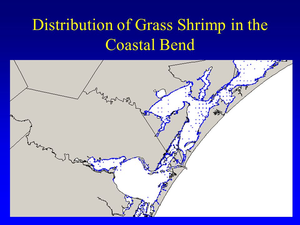 Distribution of Grass Shrimp in the Coastal Bend