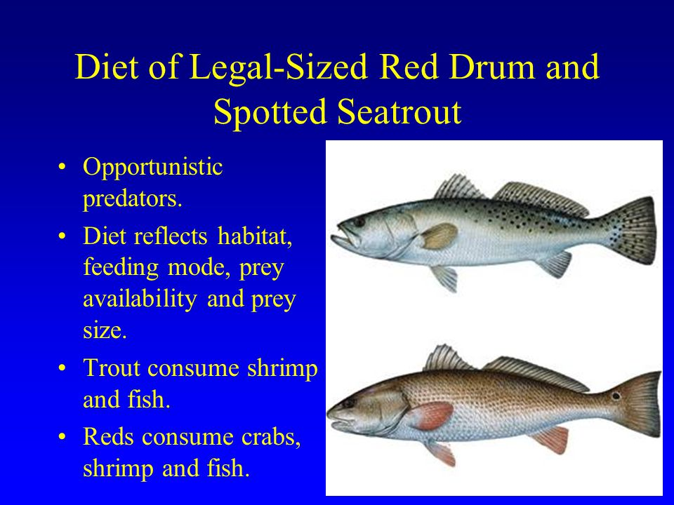 Diet of Legal-Sized Red Drum and Spotted Seatrout