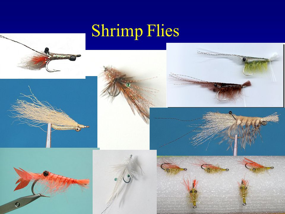 Shrimp Flies