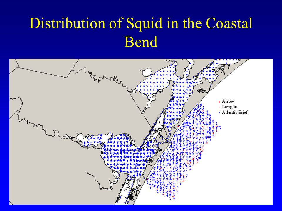 Distribution of Squid in the Coastal Bend