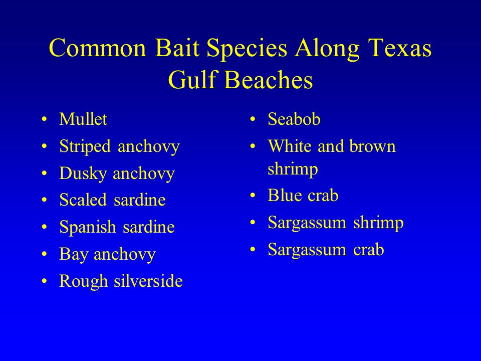 Common Bait Species Along Texas Gulf Beaches