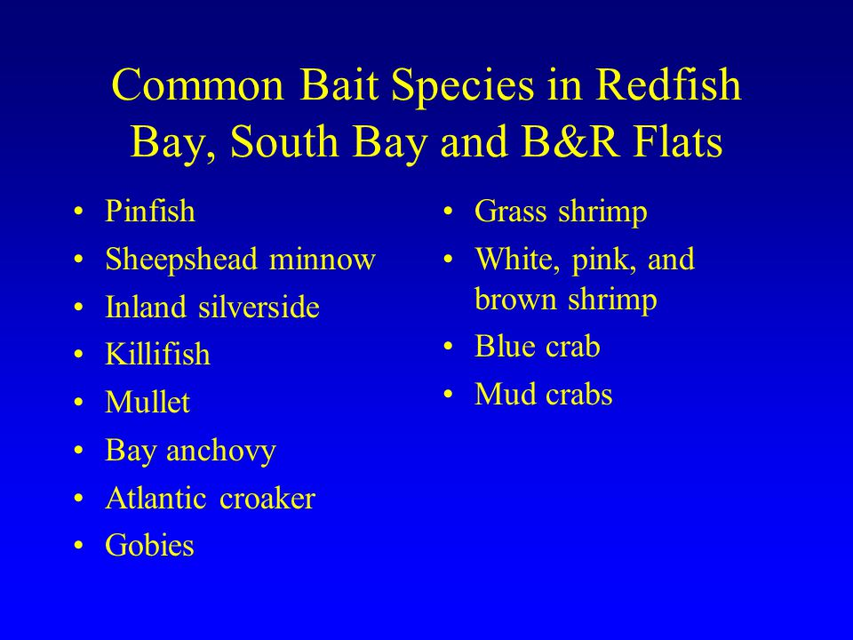 Common Bait Species in Redfish Bay, South Bay and B&R Flats