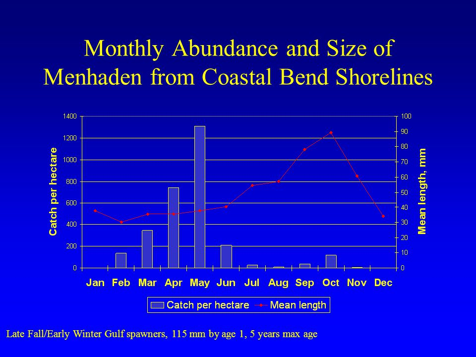 Monthly Abundance and Size of Menhaden from Coastal Bend Shorelines