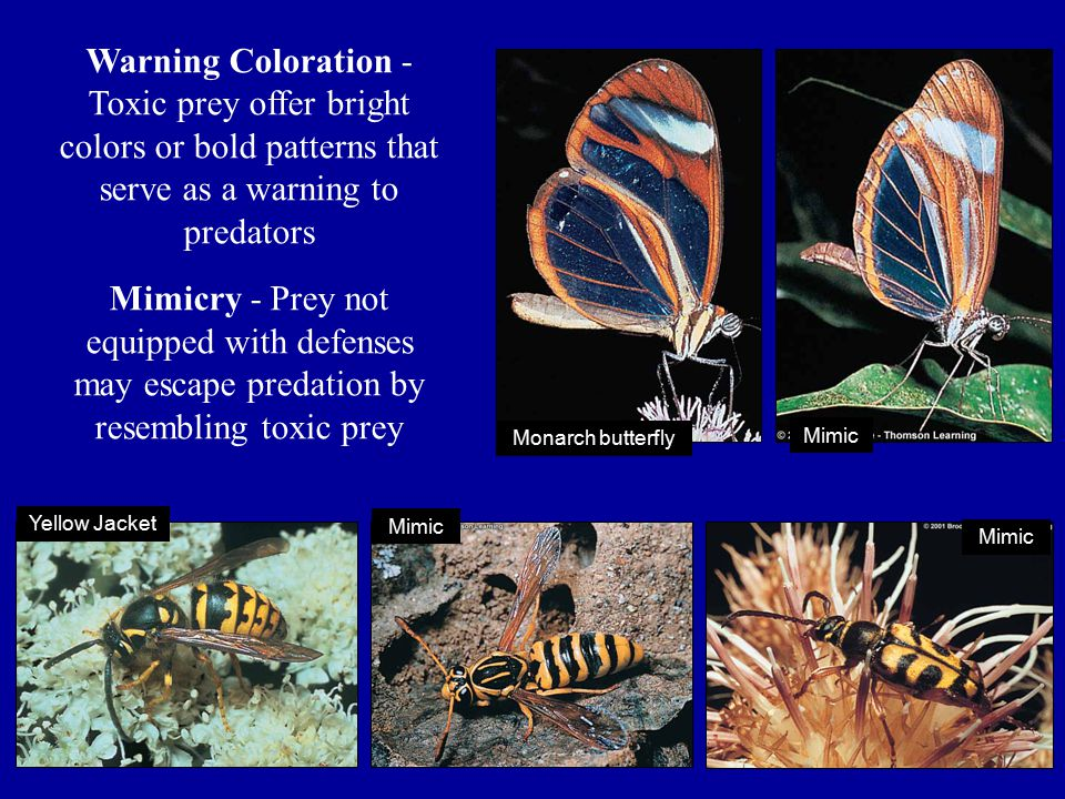 Warning Coloration - Toxic prey offer bright colors or bold patterns that serve as a warning to predators