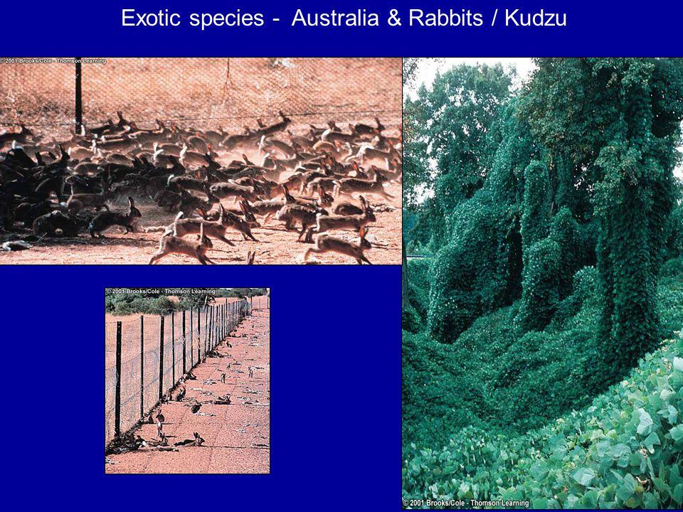 Exotic species - Australia & Rabbits / Kudzu