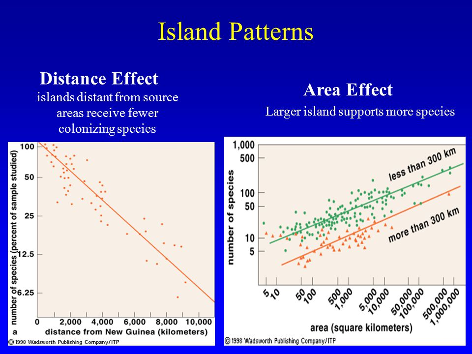 Larger island supports more species