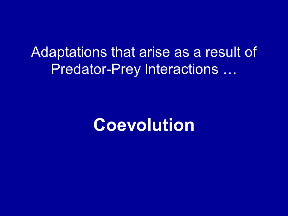 Adaptations that arise as a result of Predator-Prey Interactions …