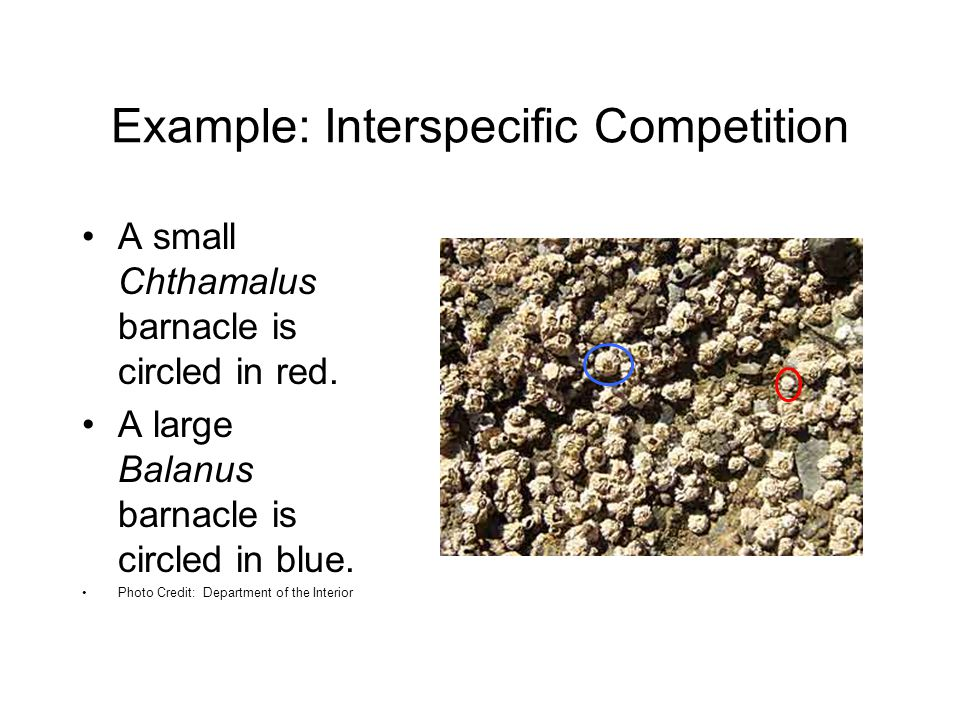 Example: Interspecific Competition