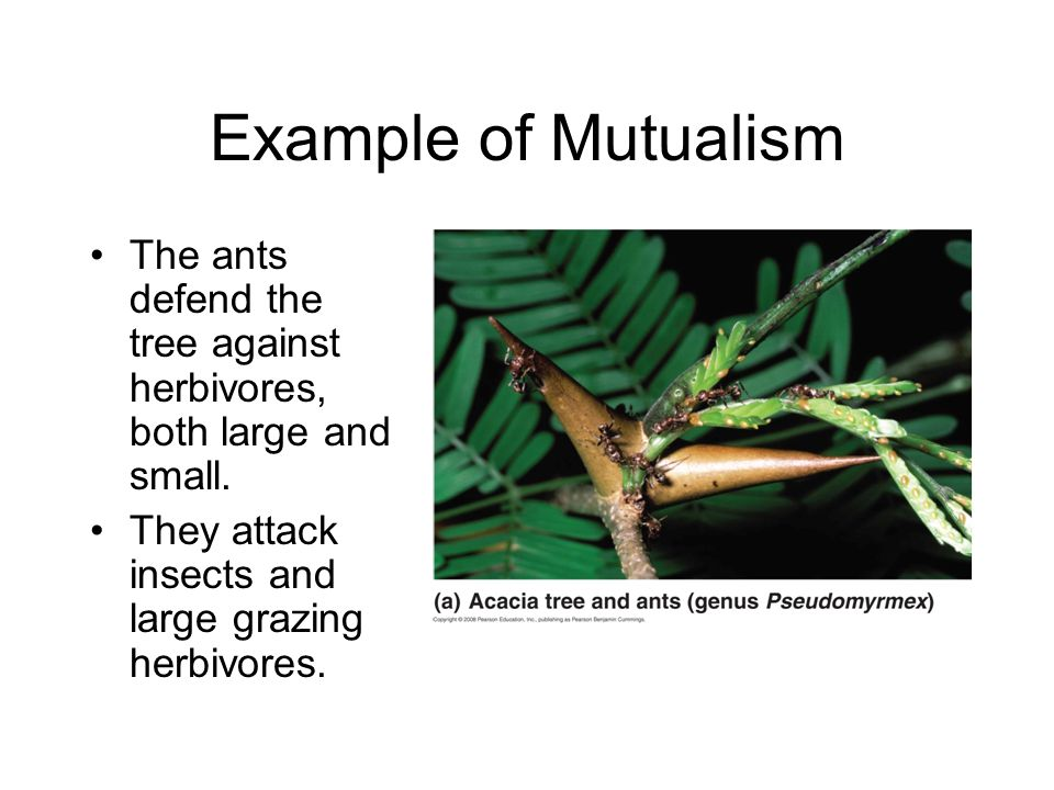 Species Interactions BIOL ppt video online download
