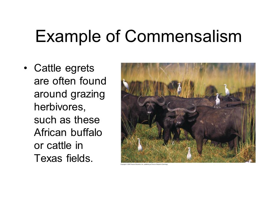 Example of Commensalism