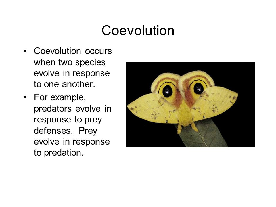 Coevolution Coevolution occurs when two species evolve in response to one another.