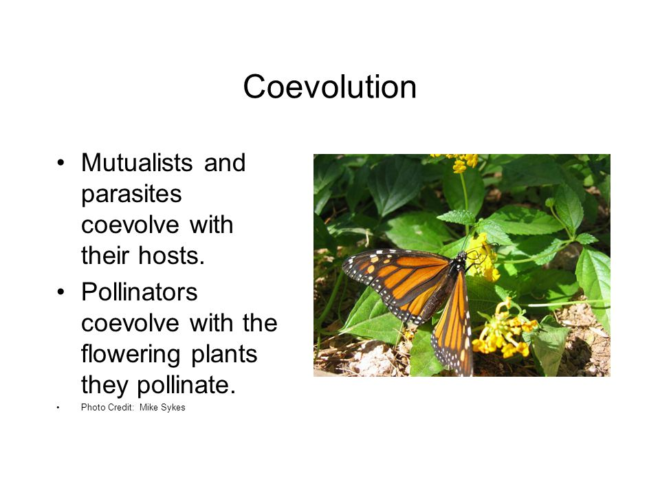 Coevolution Mutualists and parasites coevolve with their hosts.