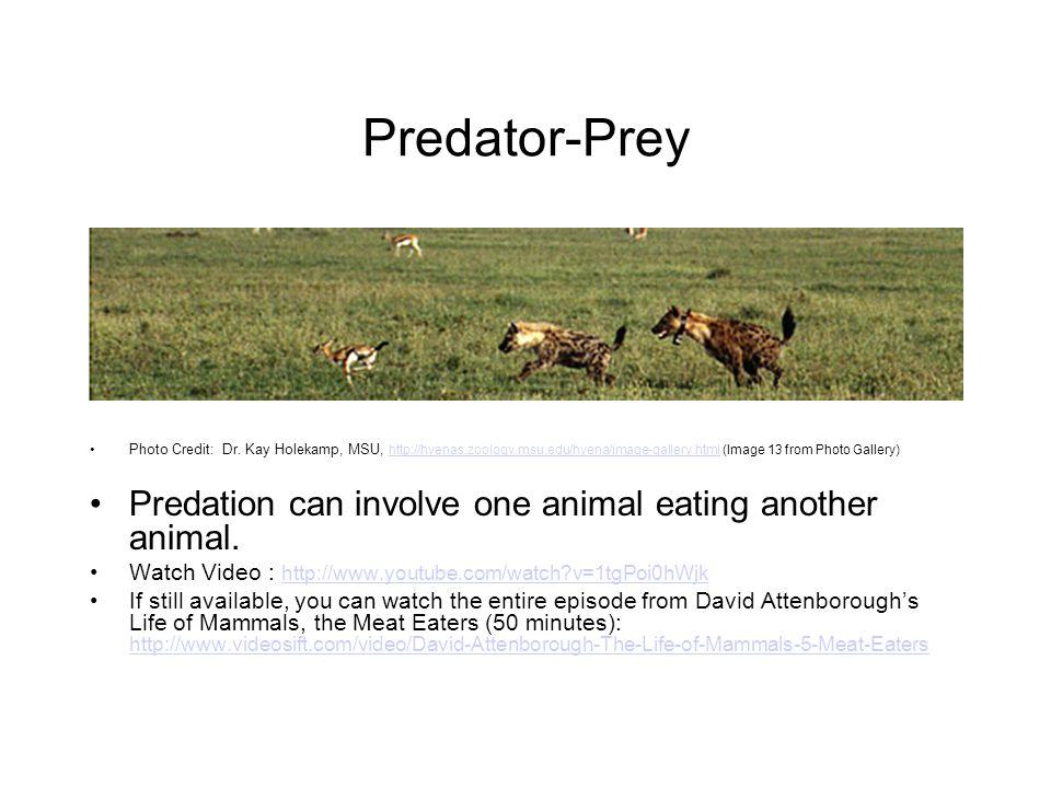 Predator-Prey Predation can involve one animal eating another animal.