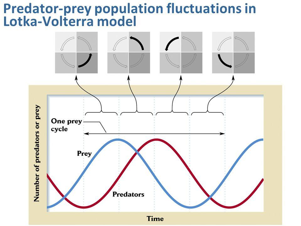 Predator-prey population fluctuations in Lotka-Volterra model