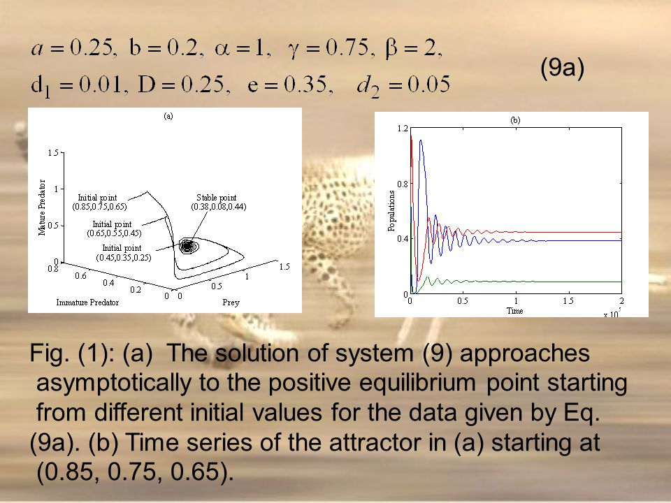 (9a) Fig. (1): (a) The solution of system (9) approaches. asymptotically to the positive equilibrium point starting.